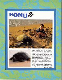 Honu_2